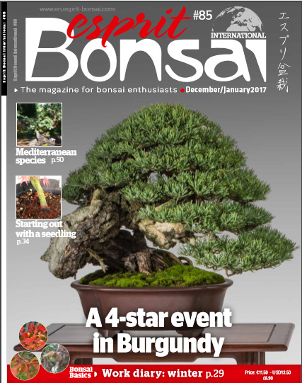bonsai magazine bonsai espirit