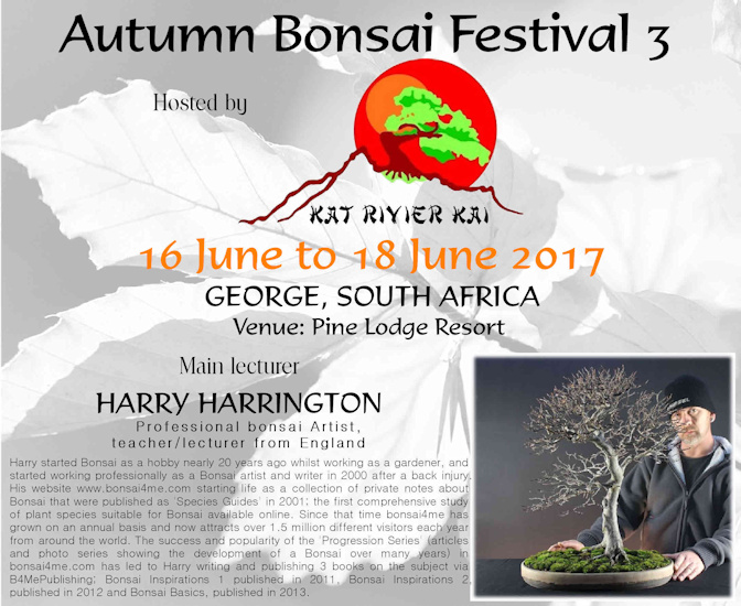harry harrington south africa bonsai